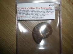 2012020940.JPG